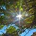 Goldener Herbst in Andalusien