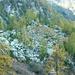 Alpe Pisom, 1712m - Karge Anhöhe mit der Hütte und den Ruinen
