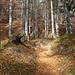 durch den herbstlichen Wald