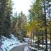 der Weg durch den Stazerwald