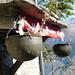 Val Lodrino - fantasievolle Blumenvasen in Piancora