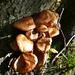 Zwischen Cadinc und Alpe Solögna - Wir kennen die Pilze nicht und lassen sie stehen