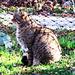 mein Favorit, eine europäische Wildkatze, leider in Gefangenschaft