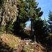 Zwischen den Skipistenabschnitten in Richtung Alp Mayen wanderte ich abschnittsweise durch den , lichtdurchfluteten Bergwald.