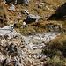 Rückblick auf den gesicherten Steig der sich gleich beim Einstieg der alpinen Route befindet. Es ist die schwierigste Stelle der Tour, aber kann von jedem Bergwanderer unschwierig begangen werden.