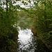 Mündung Aabach in die Aare