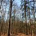 Sonniger Herbstwald!