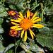 """Cheget - Am Gipfel des """"Kleinen Cheget"""" blühen aktuell zahlreiche Blumen."""