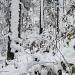 Wintereinbruch im Oberland