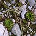 Am Ozero Donguzorun - Auf dem verlandeten Teil des See haben sich zahlreiche Pflanzen angesiedelt. Unter anderem haust hier auch der Wurz.
