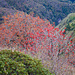 Rot: im Juni von Alpenrosen, im Oktober von Vogelbeeren