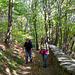 Der Aufstieg von Miglieglia führt durch schöne Laubwälder