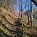 Breve tratto nel bosco.