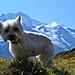 Silberhorn und der Hund Silber