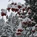 Wie Weihnachten! Grün, Weiss, Rot