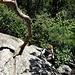 """Tiefblick in die erste Seillänge mit der typischen """"Bewaldung"""", das Gelände flacht schnell ab nach den ersten stotzigen Metern"""