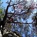 Dritte Seillänge: wer nicht aufpasst, verirrt sich [https://www.youtube.com/watch?v=0_P135_jxiI In my Tree]