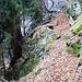 Possibilità N°1 di accesso alla valle (più facile di quel che sembra ps: la foto è dritta, anche se pare inclinata (vedi albero in bolla)