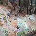 Passaggio N° 2 d'accesso alla valle. Un po' più impegnativo ma divertente (un po' meno viste le foglie)