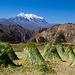 Palca Canyon mit Illimani im Hintergrund