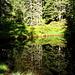 Petit lac forestier, juste en-dessous de Bort