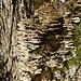 Baumpilze sonnen sich