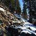 Am Südwestrücken des Gr. Aubrigs hats oben Totholz, die Schneedecke beginnt auszuapern.
