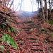 auch dieser Abstieg ist in natura um einiges steiler