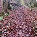 und noch mehr Stufen unter nassem Laub