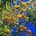 Herbst im Pitztal