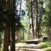 Der Hüttenweg ging zuerst durch einen schönen Lerchenwald der zudem auch noch herrlich nach Harz duftete.