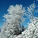 Winterzauber #2