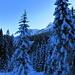 winterliches Brüeltobel am Morgen.