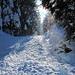 Nachmittagssonne im Brüeltobel. Sie lässt den Schnee von den Bäumen regnen.