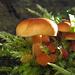 Pilze im Dezember / funghi in dicembre