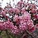 ... mit wohlriechenden, feinen, Blüten