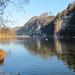 Schwäne und Enten am Wichelsee.