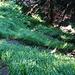 Zick-Zack-Aufstieg im Näntriger Wald
