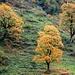 Herbst im Windautal