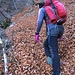 Lo strato di foglie che copre il sentiero è veramente notevole.