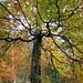 mit hübschen Buchenwäldern