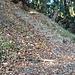 Im Rücken des erwähnten Bänkleins führt die Treppe zur Teehütte und zur Gratstrasse hoch.