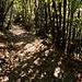 Im Aufstieg zum Cardada auf mit Kastanien übersätem Pfad