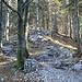 Typischer Wegverlauf im oberen Waldteil