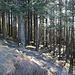 Der schöne, lichtdurchflutete Wald
