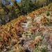 Wegspur zwischen P. 1451 und P. 1606 durch verdorrten Farn, nach den Hütten entlang der Cimetta-Sesselbahn