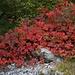 Herbst am Monte Misone