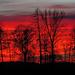 Brennende Bäume am Lechhöhenweg / Alberi in fuoco sul Lechhöhenweg