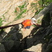 Piccolo scalatore in azione......