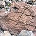Wo wir schon bei Steinen sind. Ein Hirnstein mit leichtem Dachschaden. Ob er die Gemeinsamkeit mit mir erkannt hat? Zumindest ist er etwas rot geworden...